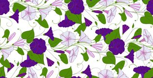 Floral elegant background convolvulus. seamless tender pattern flower bindweed. Morning-glory endless feminine ornament. Illustration royalty free illustration