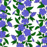 floral elegant background periwinkle. seamless tender pattern flower vinca. catharanthus endless feminine ornament. vector illustration