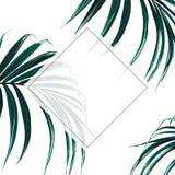 Floral elegant invite card gold frame design: tropical exotic dark palm leaves. vector illustration