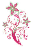 Floral element Royalty Free Stock Images