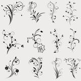 Floral element. Floral design set on a grey background Stock Image