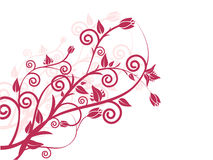 Floral elements. Vector illustration of a floral background Stock Photography