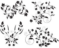 Floral elements Royalty Free Stock Image