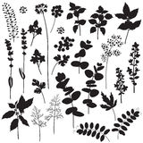 Floral elements and berries silhouette Royalty Free Stock Image