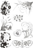 Floral elements collection Stock Image