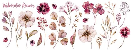 Floral elements collection, watercolor flower set. Botanical template isolated on white, handpainted aquarelle wildflower compilation royalty free illustration