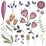 Floral elements. Vector collection for your design. Floral elements. Vector collection of stylized plants for design Royalty Free Stock Photo