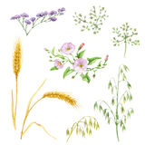 Floral elements Stock Images
