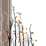 Floral Fall Background. A background image with fall colored leaves and bare branches Royalty Free Stock Photography