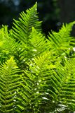 Floral fern background Royalty Free Stock Photos