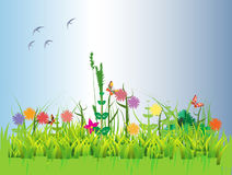 Floral field Stock Photography
