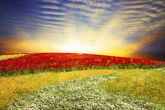 Floral field on sunset Royalty Free Stock Images