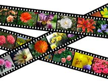 Floral filmstrips illustration. Illustration of filmstrips with images of flowers on white background Stock Images