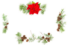 Floral flat lay Christmas flower poinsettia pine cones Stock Photos
