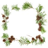 Floral Flat lay frame background Christmas decoration. Floral Flat lay frame background. Christmas decoration pine cones Stock Photography