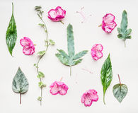 Floral flat lay with pink flowers and various green leaves . Flowers and plants composition on white table background. Top view Royalty Free Stock Image