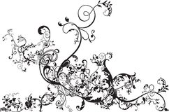 Floral flourish. A floral flourish in black isolated on white Royalty Free Stock Photo