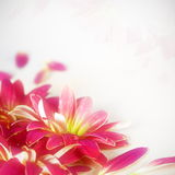 Floral Flower Background Stock Images