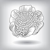 Floral Flower Elements for design Stock Image