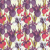 Floral flower iris seamless hand drawn pattern.Colored ink splat Stock Image