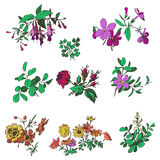 Floral flower set  isolated white doodle vintage element  Royalty Free Stock Images