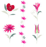 Floral, flower, tulip elements Royalty Free Stock Photo