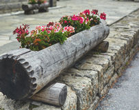 Floral flowerbed in a big log Stock Photo