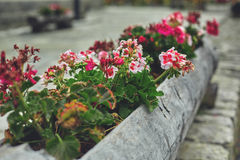 Floral flowerbed in a big log Royalty Free Stock Photography