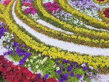 Beautiful ornament flowerbeds. Bright flower bed with beautiful design. Floral background Stock Photos
