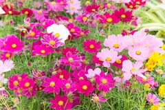 Floral Flowers In The Garden , Pink Flowrs Nature Background Stock Photography