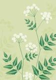 Floral-fond Images libres de droits