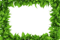 Floral frame. 3D rendered floral frame with white background Stock Photo
