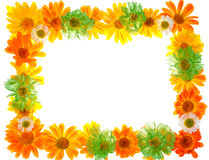 Floral frame Royalty Free Stock Photos