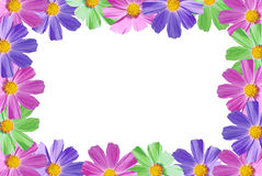 Floral frame. Beautiful floral frame. Flowers. Isolated Royalty Free Stock Photography