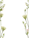 Floral frame. Isolated on white Stock Images