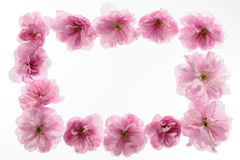 Floral frame. With space for your text Stock Photo