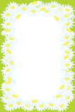 Floral frame background from camomile flower Stock Photo