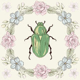 Floral frame and beetle Royalty Free Stock Photos