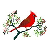 Cardinal bird on a branch. Floral frame with a cardinal bird on a branch with leaves and berries. Vector illustration. Isolated on white background stock illustration
