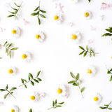 Floral frame with chamomile flower and green branches Royalty Free Stock Photo