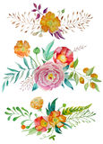 Floral frame collection Royalty Free Stock Photo