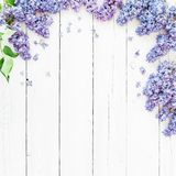 Floral frame composition with lilac flowers branches on white background. Flat lay, top view. Floral frame composition with lilac flowers branches on white royalty free stock photos