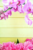 Floral frame consisted of orchids and peonies Stock Images