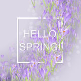 Floral frame with crocuses and  snowdrops. Purple background Royalty Free Stock Photography