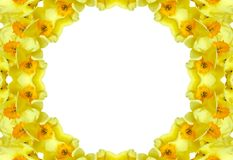 Floral frame - daffodils. Yellow narcissus (daffodil) kaleidoscopic round frame. Isolated, white background Stock Photos
