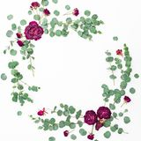 Floral frame of dried rose flowers and eucalyptus branches on white background. Flat lay, top view. Valentines day background. Floral frame of dried rose flowers royalty free stock photo