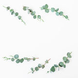 Floral frame with eucalyptus leaves and branches on white background. Flat lay, top view. Floral frame with eucalyptus leaves and branches on white background Royalty Free Stock Photography
