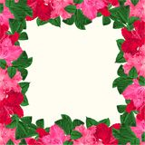 Floral frame festive background with blooming branches pink and red flowers rhododendrons vector Illustration greeting card edit. Able hand draw Stock Photography