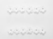 Floral frame from flowers of the primrose on a white background with space for text Stock Photos