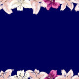 Floral frame of gently pink lilies flowers isolated on dark blue background. Vector illustration. Stock Image